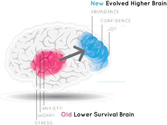 Higher Brain Living Boulder Denver Colorado